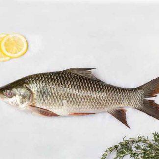 Catla & Rohu Fish